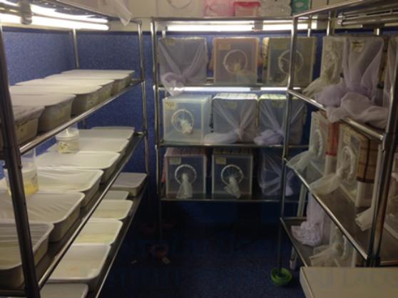 Figure 4. Colony room at the Institut Pasteur du Laos.